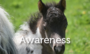 Lucys Project - core strategy Awareness